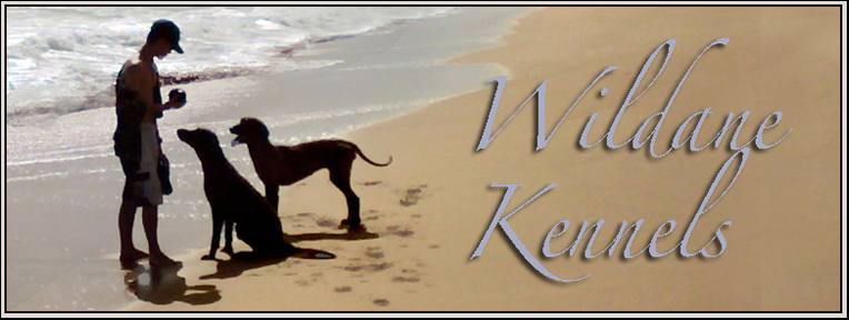 Wildane Kennels puerto rico pet movers travel boarding pickup service